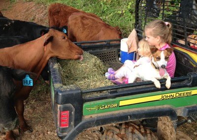 Kids-feeding-the-cows